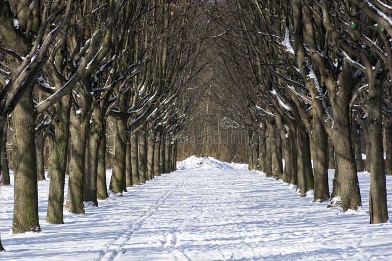 Gränd i parkera, träd, snö, vinter, solig dag, natur arkivfoto