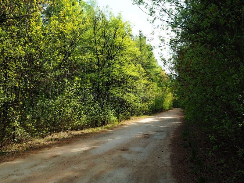 Gränd i skogen royaltyfria bilder