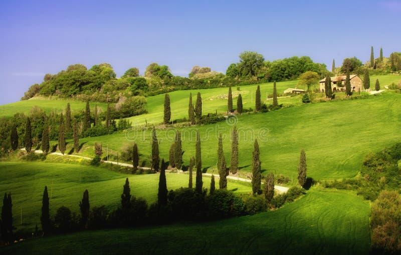grändcypressliggande tuscany royaltyfria foton