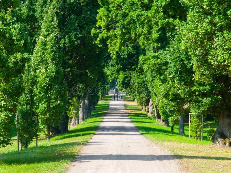 Gränden för trädet för landsvägen i härligt parkerar arkivbild