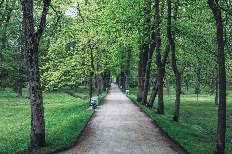 Gränden med gröna sommarträd, gångbanaluftbana i härligt parkerar royaltyfria bilder