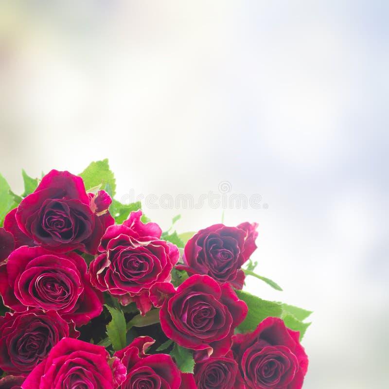Gräns av röda och rosa rosor royaltyfria foton