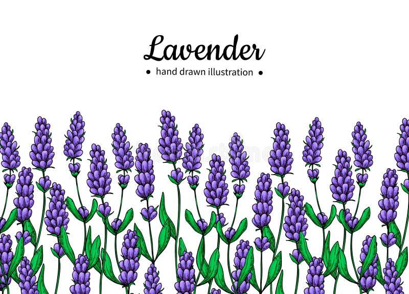 Gräns för lavendelvektorteckning Isolerade lös blomma och sidor Växt- illustration för konstnärlig stil vektor illustrationer