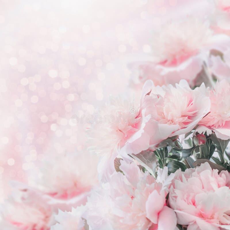Gräns för pioner för pastellfärgade rosa färger blom- med bokeh arkivbilder