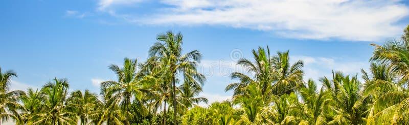 Gräns med kokosnötpalmträd på den härliga ön Gömma i handflatan, blå himmel och molnbakgrund arkivbild