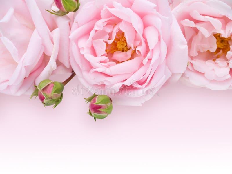 Gräns - rosa rosbukett arkivbilder