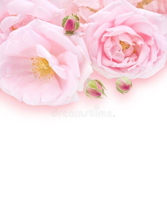 Gräns - rosa rosbukett arkivfoto