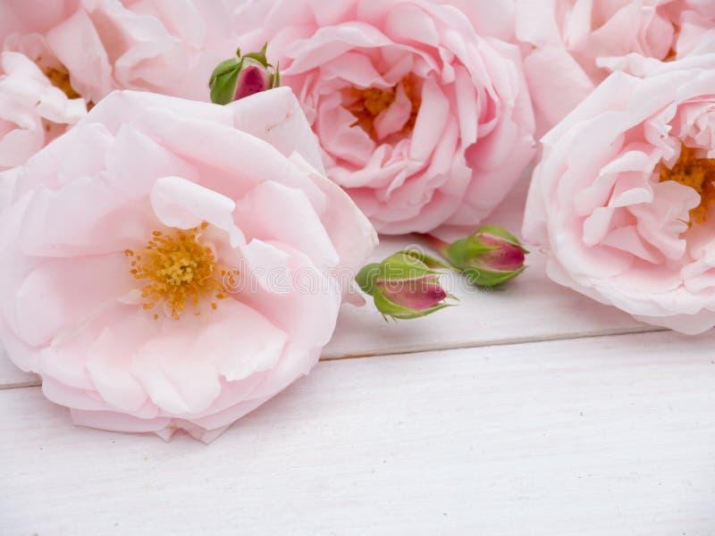 Gräns - rosa rosbukett på den lantliga träbakgrunden arkivbild