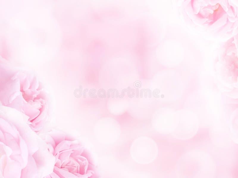 Gräns - rosa rosor i hörnen av den suddiga bakgrunden arkivbild