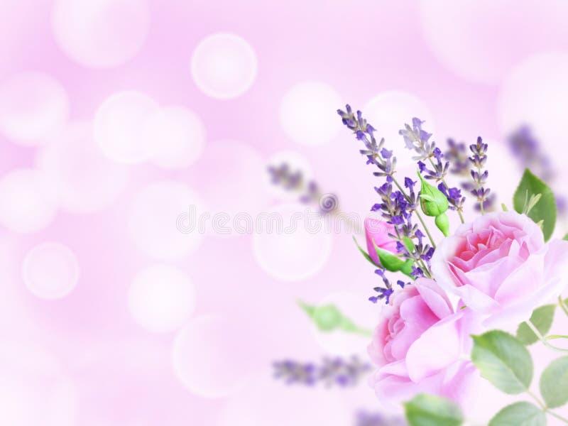 Gräns - rosa rosor och lavendel i hörnet av den suddiga backgren arkivfoton