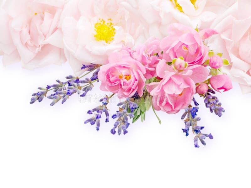 Gräns - rosa rosor och lavendelbukett royaltyfri fotografi