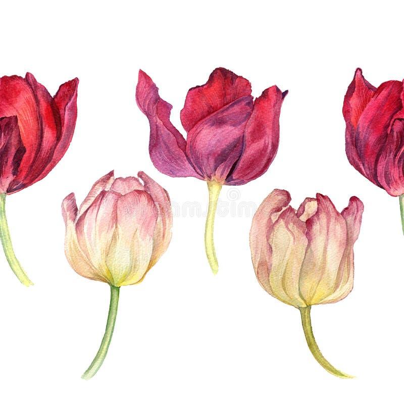 Gränsa den sömlösa modellen med röda och rosa tulpan för vattenfärgen royaltyfri illustrationer