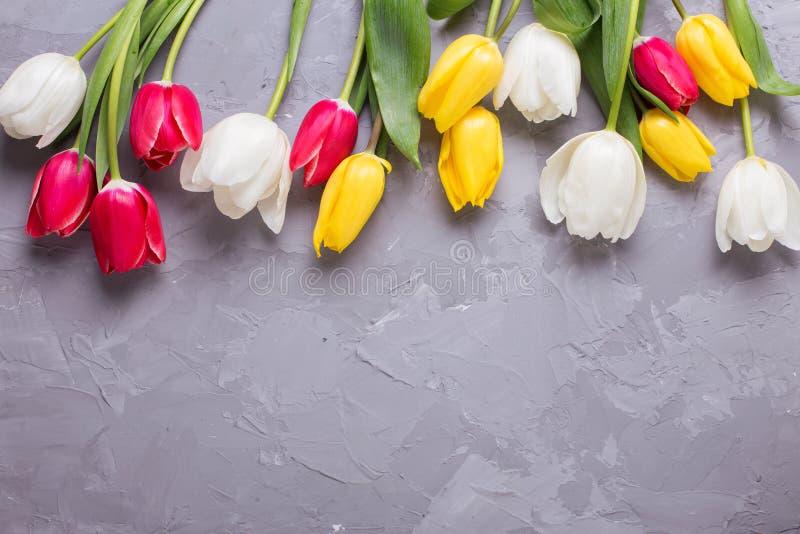 Gränsa från ljusa röda och vita tulpanblommor för guling, på grå färger royaltyfri foto