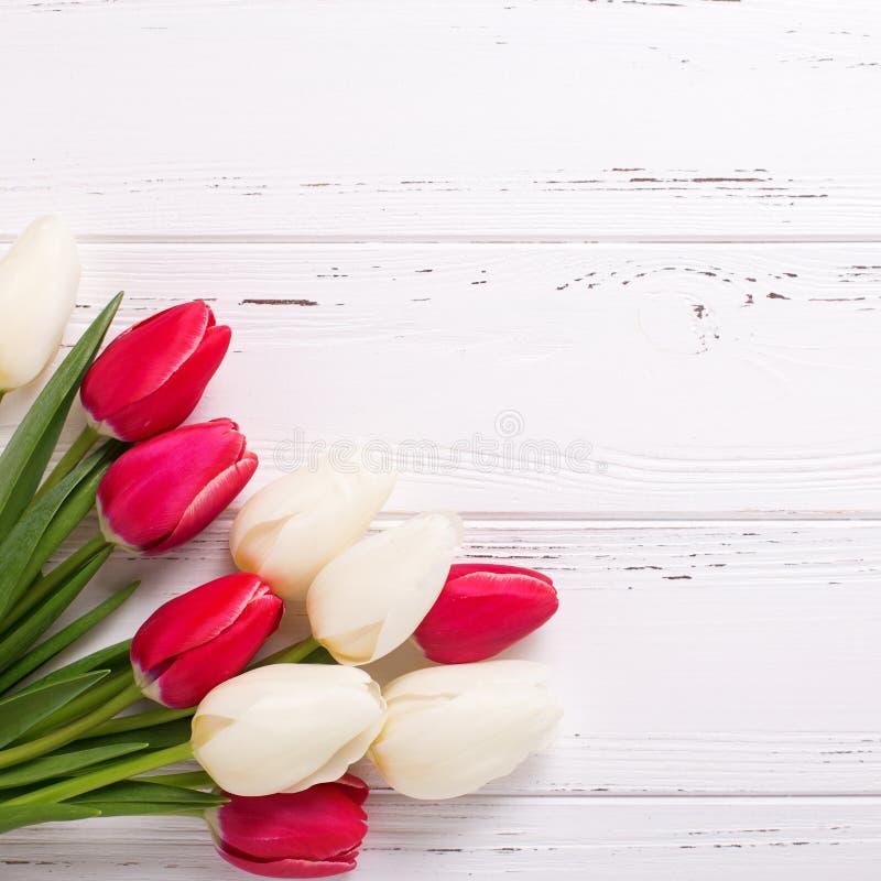 Gränsa från ljusa rosa och vita tulpanblommor på vit wo arkivfoto