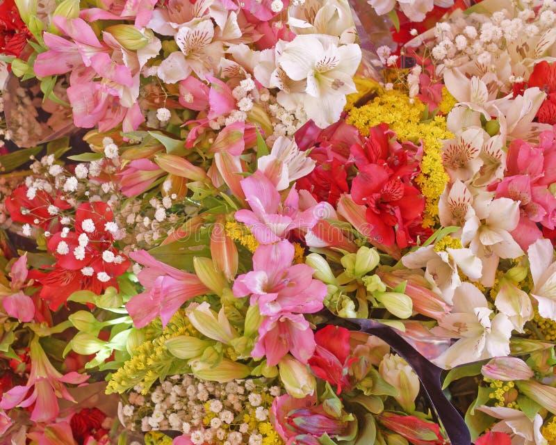 Gränsen färgad freesia blommar bästa sikt royaltyfri bild