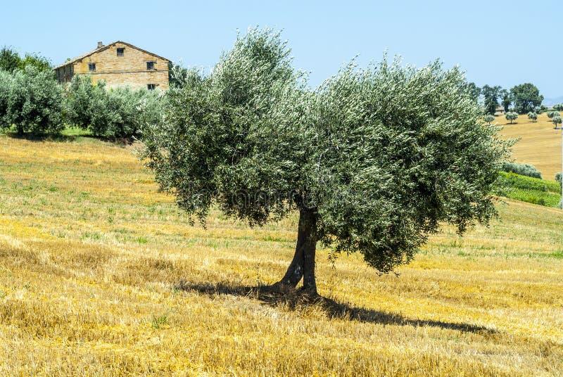 Gränser (Italien) - Landskap Arkivbild