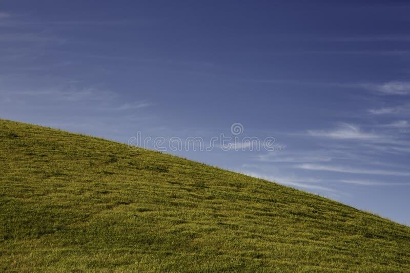 gräs- äng royaltyfria foton