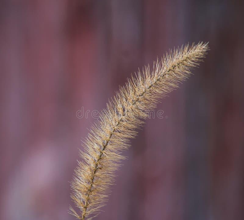 Gräs arkivfoton