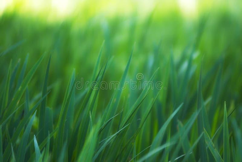 Download Gräs fotografering för bildbyråer. Bild av frodigt, morgon - 37344065