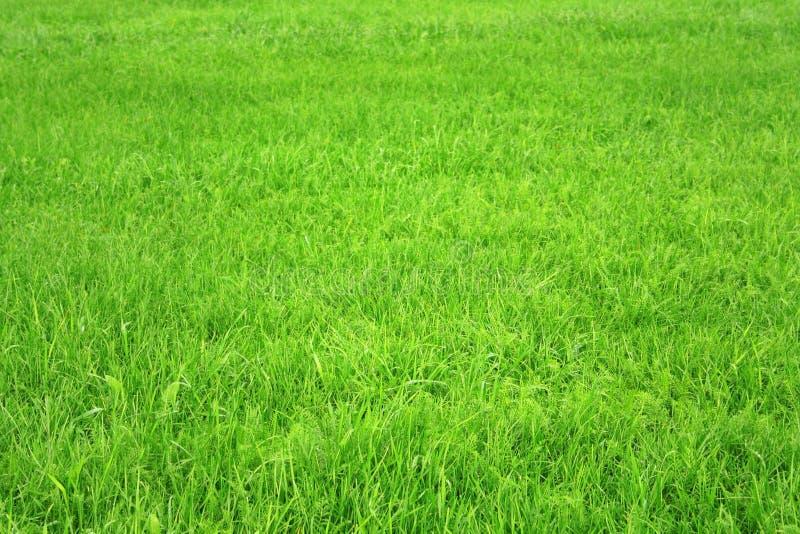 gräs royaltyfri bild