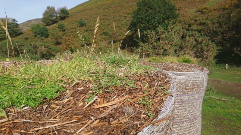 Gräs att växa ut ur överkanten av ett ok av sugrörhö royaltyfria bilder