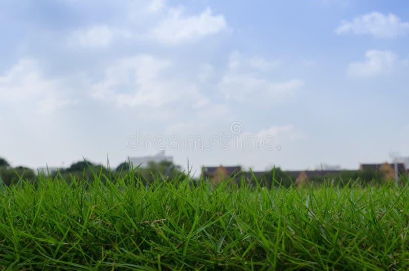 Gräs av den gröna gården fotografering för bildbyråer
