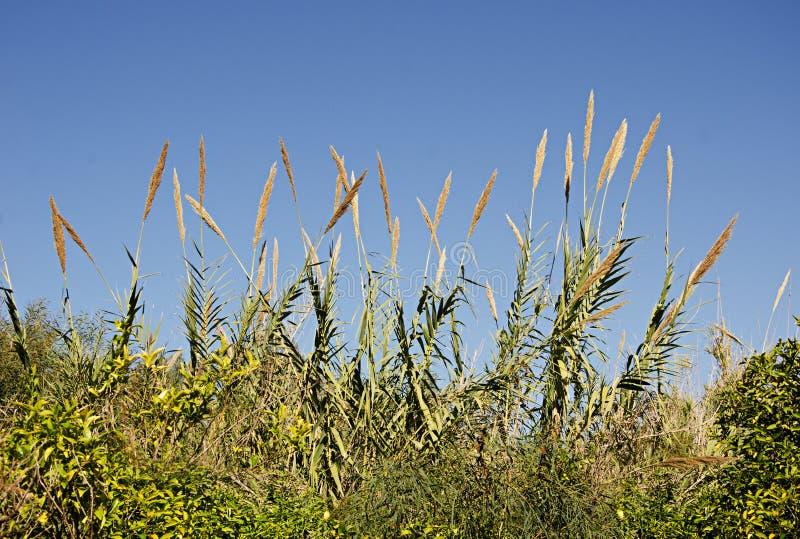 Gräs av Israel royaltyfri bild