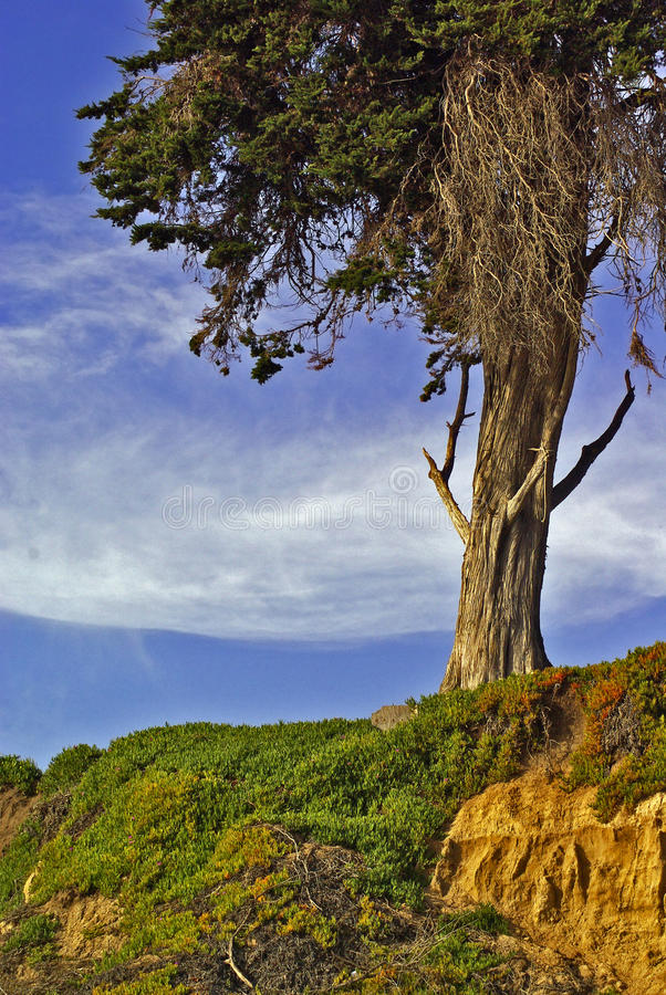 gräs- backtree arkivbilder