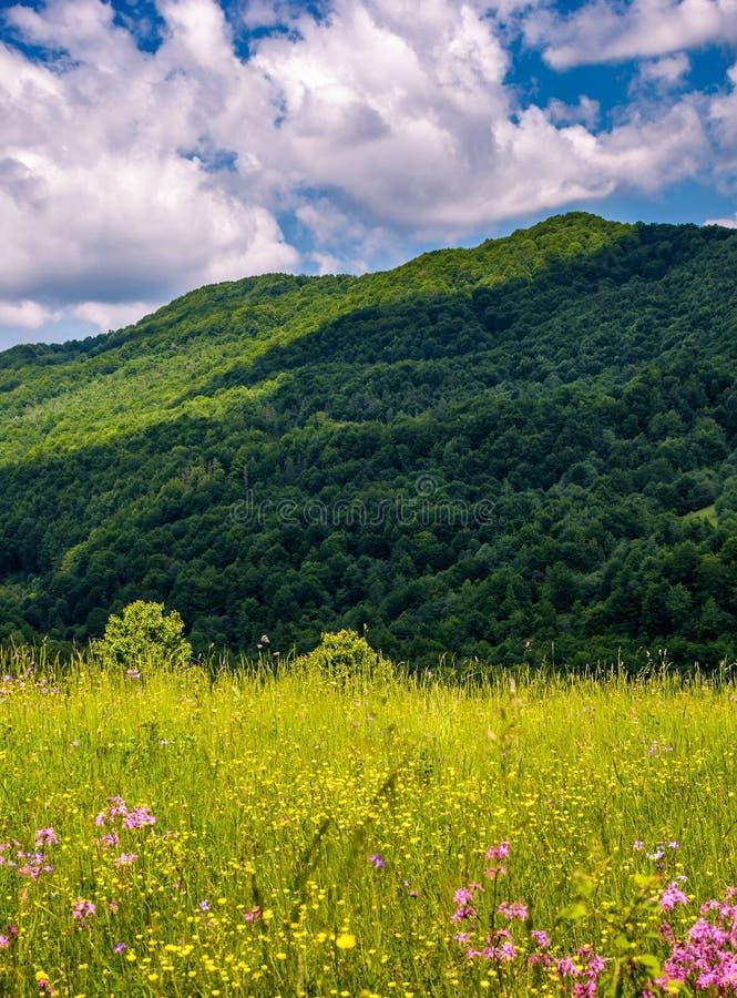 Gräs- beta med lösa blommor i berg arkivbilder