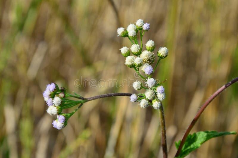 Gräs blomman royaltyfria foton