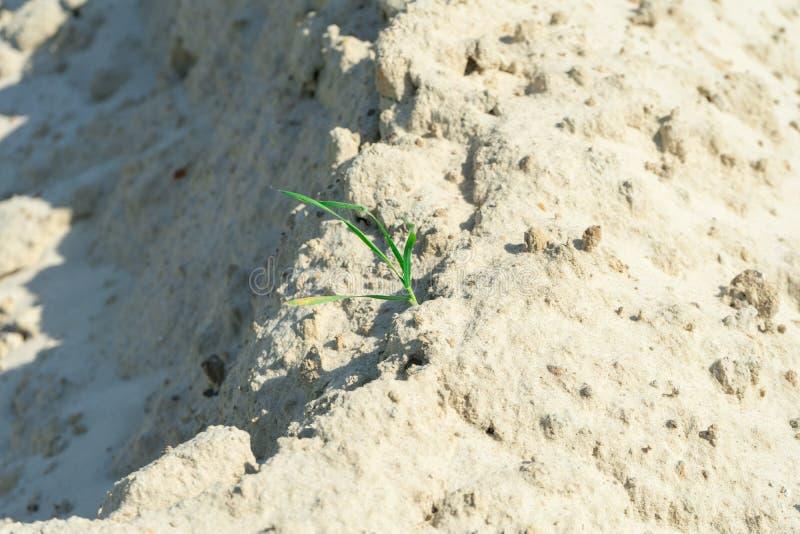 Gräs bryter till och med dyerna av öknen arkivfoto