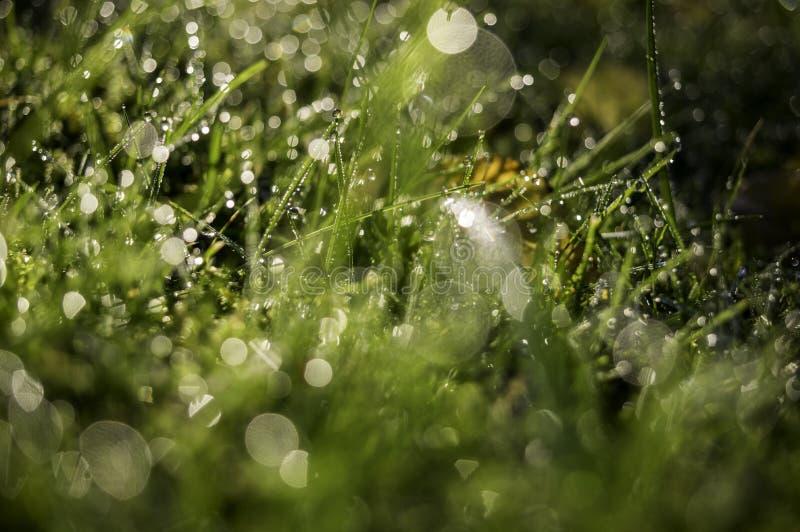 Gräs, dagg och nedgångljus arkivbild