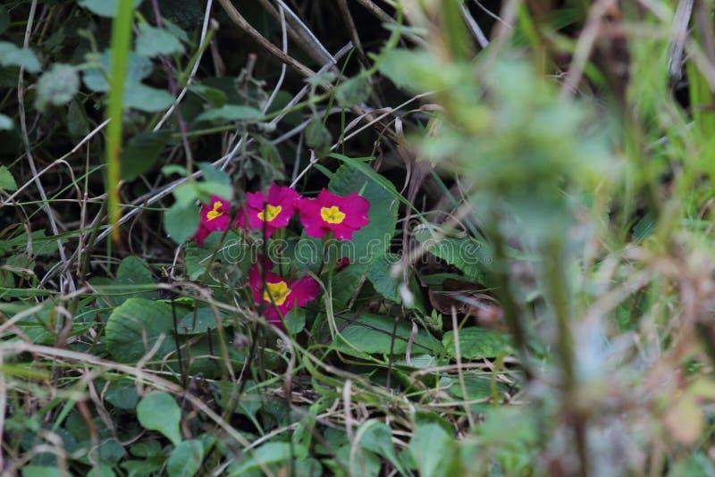 Gräs den på engelska trädgården, closeup, med lavendel och små flowes 2 royaltyfria bilder