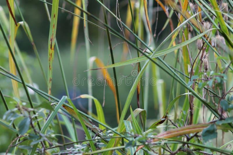 Gräs den på engelska trädgården, closeup, med lavendel och små flowes 4 royaltyfri fotografi
