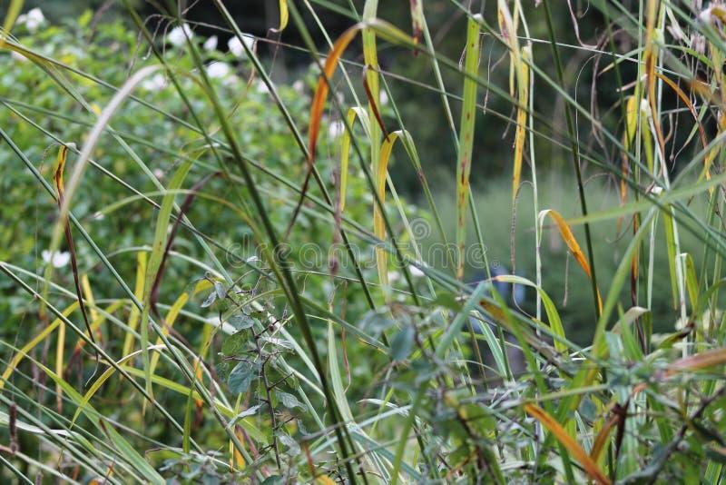 Gräs den på engelska trädgården, closeup, med lavendel och små flowes 6 arkivbild