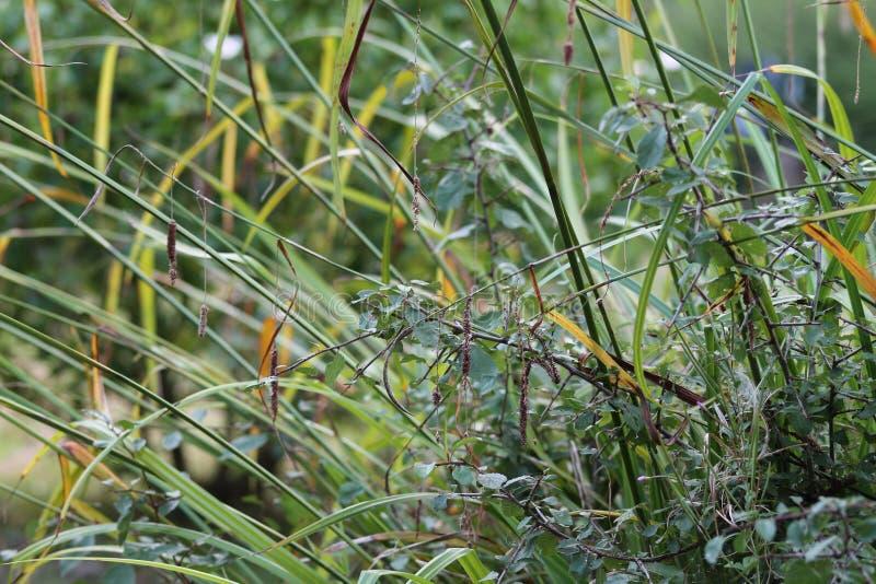 Gräs den på engelska trädgården, closeup, med lavendel och små flowes 11 royaltyfria bilder
