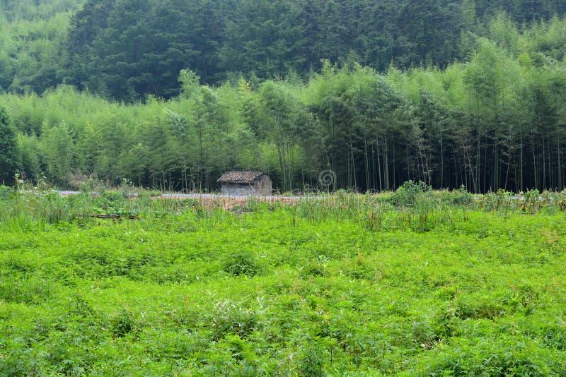 Gräs- fält- och bambuskog fotografering för bildbyråer