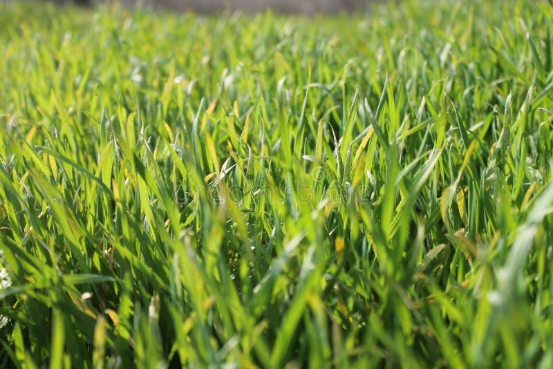 Gräs för ² а/Green för 'раРför  Ñ för Ð--ÐΜД ÐΜÐ-½ Ð°Ñ arkivbilder