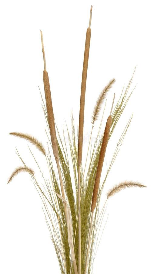 gräs för 2 ordning royaltyfri bild