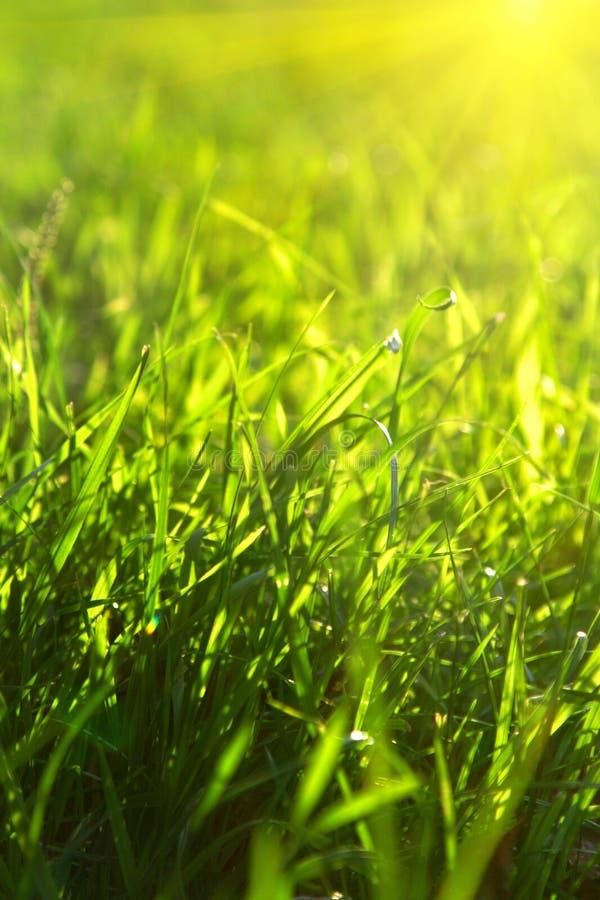 gräs green arkivbild