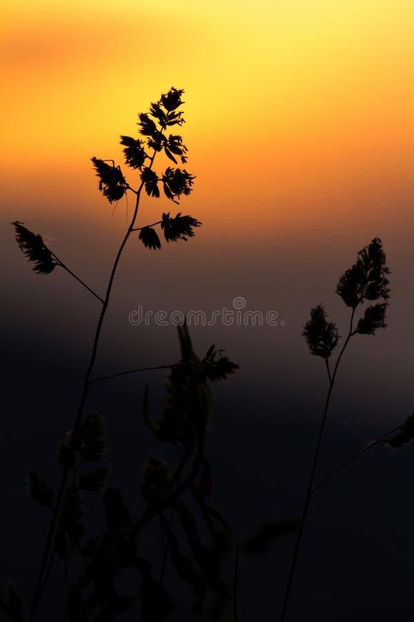 Gräs i det underbara solnedgångljuset arkivfoto