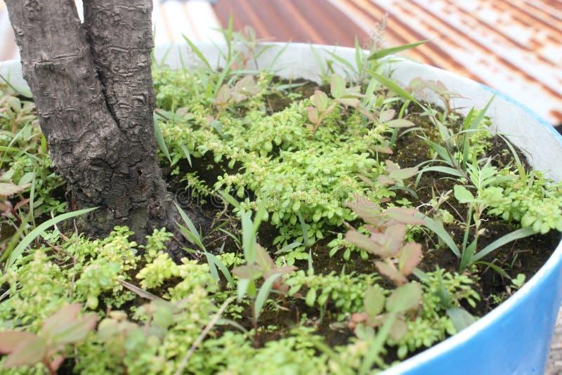 Gräs i en hink arkivbild