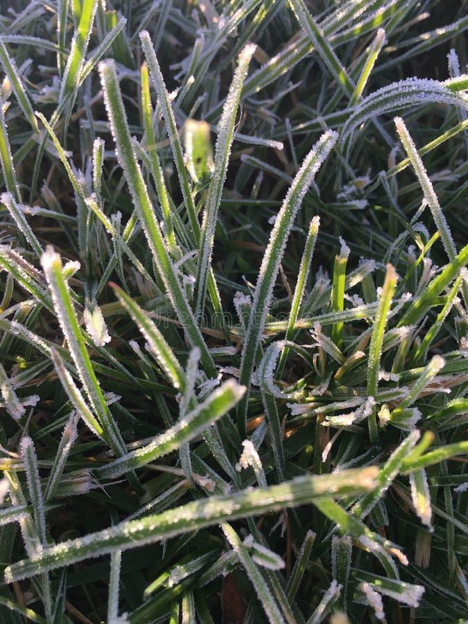 Gräs i frosten royaltyfri foto