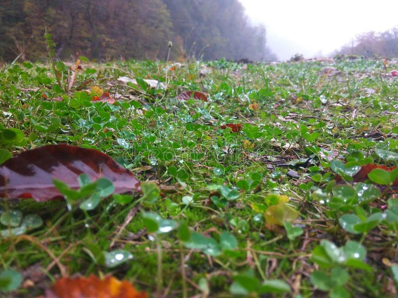 Gräs i khinalig _ arkivbild