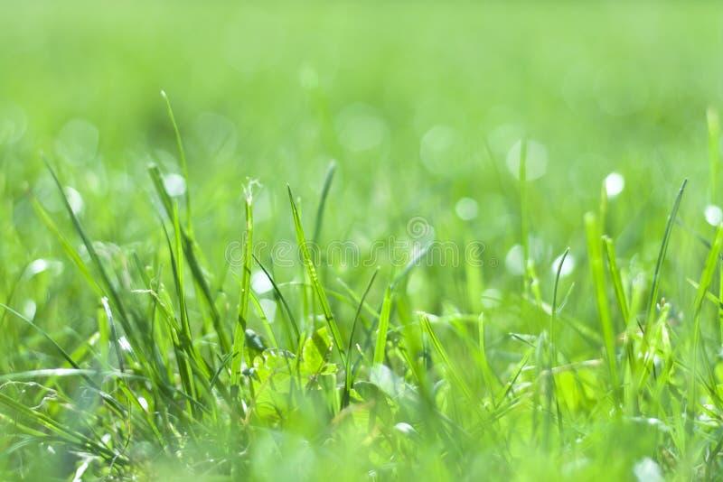 Gräs i sunlampa royaltyfri fotografi