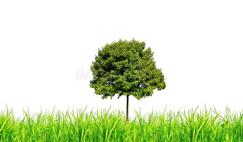 gräs isolerad tree royaltyfri foto