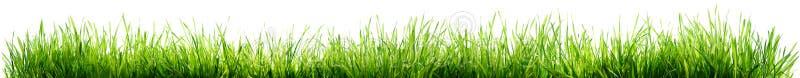 gräs isolerad white fotografering för bildbyråer
