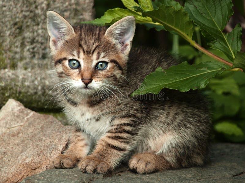 gräs kattungen royaltyfri bild