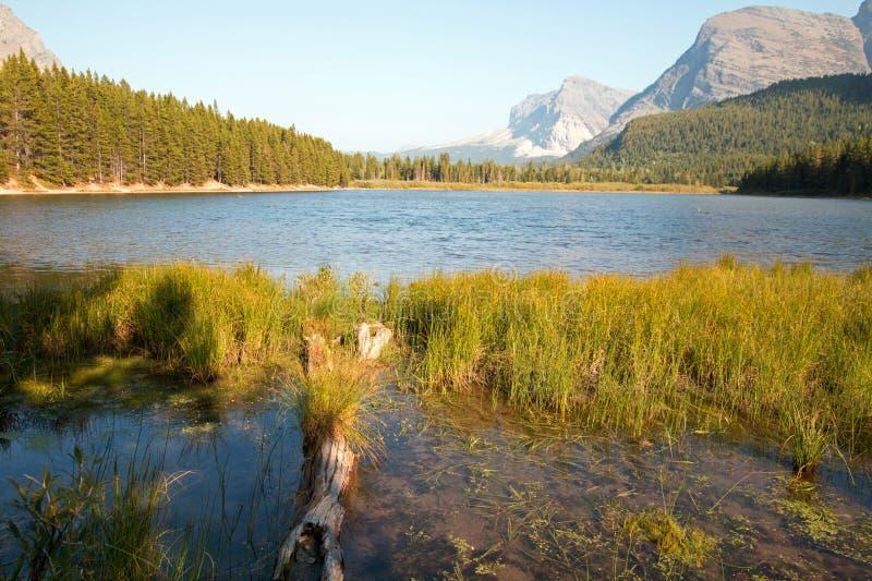 Gräs- kust av Fishercap sjön i glaciärnationalpark i Montana USA royaltyfria bilder