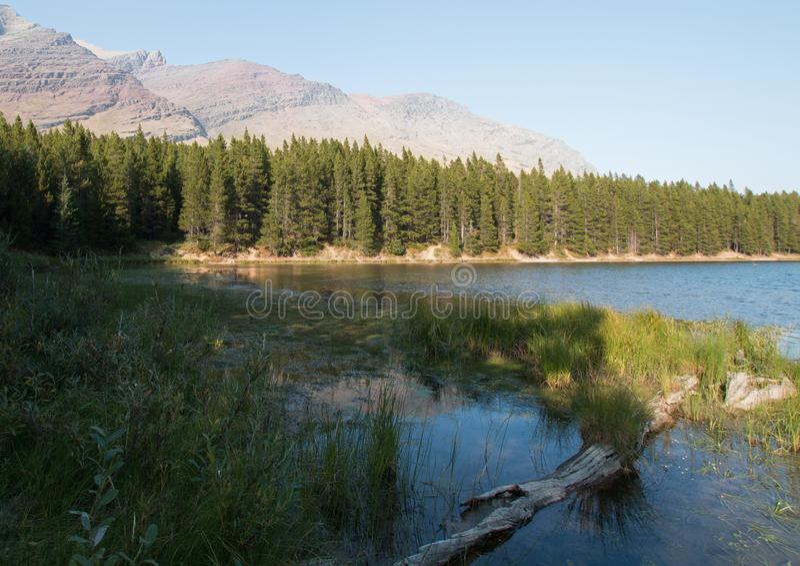 Gräs- kust av Fishercap sjön i glaciärnationalpark i Montana USA arkivfoton